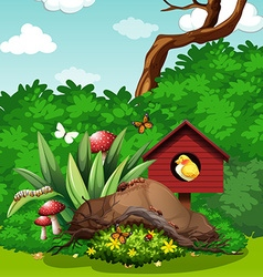 Bird and bugs in the garden vector image