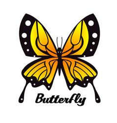 Black yellow butterfly white background ima vector