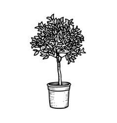 Monochrome sketch orange tree or ficus vector