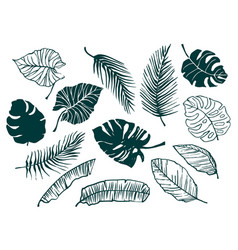 set hand-drawn tropical leaves trendy vector image