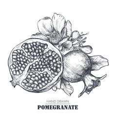 composition pomegranate fruits flowers vector image