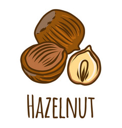hazelnut piece icon hand drawn style vector image