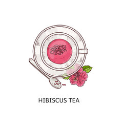 hibiscus tea - pretty pink drink with dry flower vector image