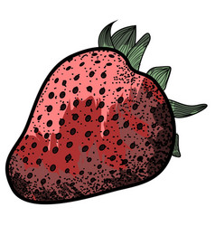 isolated vintage strawberry vector image