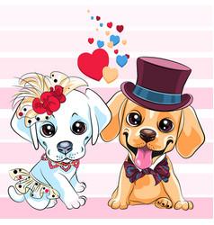Lovers cute labrador retriever dogs vector