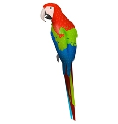 parrot bird detalised on white background vector image