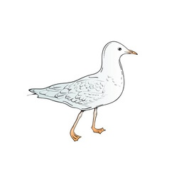 sea gull vector image