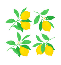 Set of lemon tree branches vector