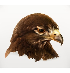 Eagle head realistic vector image