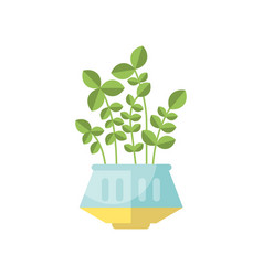 green house plant indoor flower in pot elegant vector image vector image