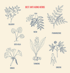 Best anti-aging herbs collection vector