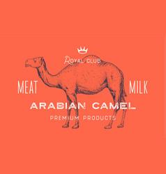 camel dromedary template label vector image
