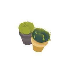 natural green cactus or cacti in a pot vector image