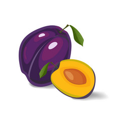 plum isolated on a white background vector image