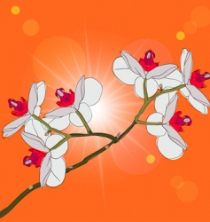 orchids vector image vector image