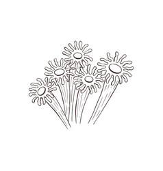 anemone sketch collection vector image