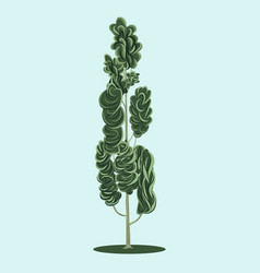 Poplar tree with natural leaves shades vector