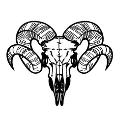 Skull of a sheep horns silhouette vector