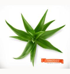 aloe vera medicinal plant 3d icon vector image