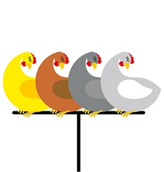 Chicken sitting on perch Birds at farm are sitting vector image