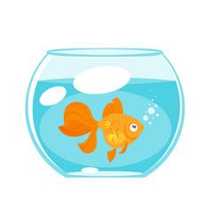 animal pet - gold fish vector image