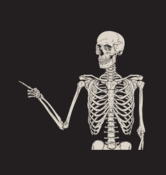 Human skeleton finger pointing isolated over black vector