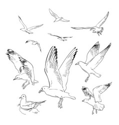 set of flying seagulls hand drawn in vector image