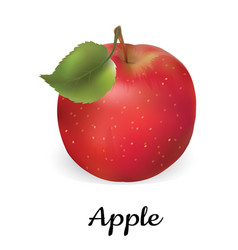 apple red isolated apple vector image vector image
