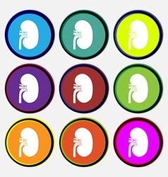 Kidney icon sign Nine multi colored round buttons vector image vector image
