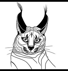 Cat caracal kitten wild animal sketch tattoo vector