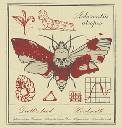 Retro banner with drawing of a butterfly dead head vector