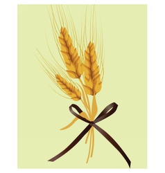 Wheat ears design for labels or decoration vector image