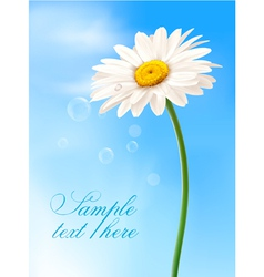 Beautiful daisy card vector
