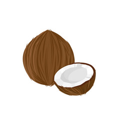 cartoon fresh coconut isolated on white background vector image