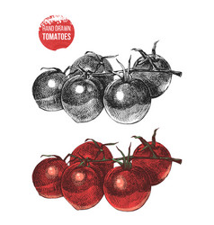Hand drawn cherry tomatoes vector