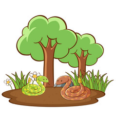 isolated picture snakes on ground vector image