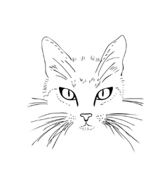 Cat face Black and white sketch vector image