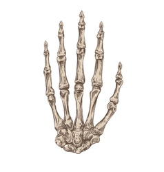 Hand drawing skeleton hand vector image vector image