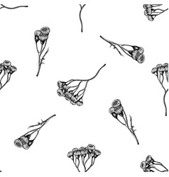 seamless pattern with black and white tansy vector image