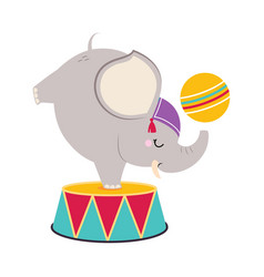 Circus elephant animal on drum with ball standing vector