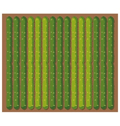 Row of vegetables from topview vector