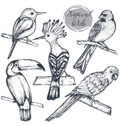 collection sketch exotic tropical birds vector image
