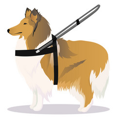 Collie guide dog vector