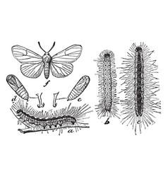 Fall webworm vintage vector