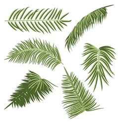 Green Palm Leaves2 vector image