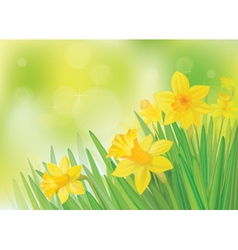 daffodil flowers vector image vector image