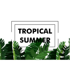 tropical design with exotic palm leaves vector image vector image