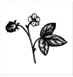 Hand drawn strawberry plant vector