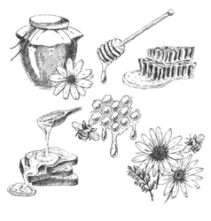 Honey elements set hand drawn jar spoon vector