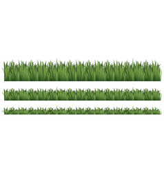 seamless background for green grass vector image